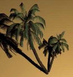 مدل سه بعدی درخت موز