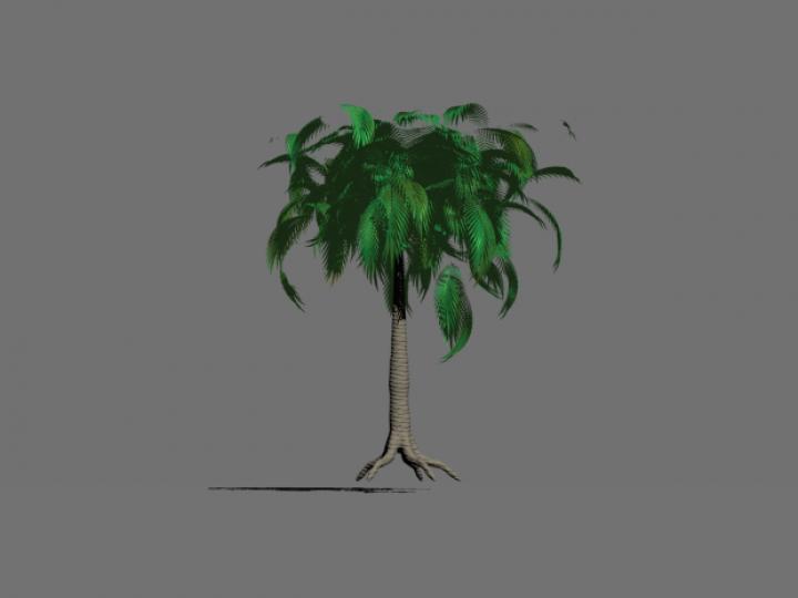 مدل سه بعدی درخت نارگیل